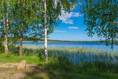 Green birch on the lake in early summer. Green birch on the waterside of lake in early summer Royalty Free Stock Image
