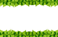 Green birch leaves frame Royalty Free Stock Photos