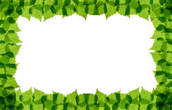 Green birch leaves frame Stock Images