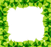 Green birch leaves frame Royalty Free Stock Photo