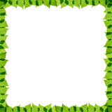Green birch leaves frame Royalty Free Stock Images