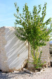 Green birch and marble blocks in Murcia, Spain Stock Images