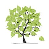 Green birch tree for your design Stock Images
