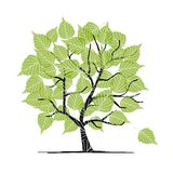 Green birch tree for your design Royalty Free Stock Images