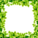 Green birch twigs frame Stock Photo