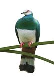 Green Bird on the Branch. Big green bird on the branch isolated on white Royalty Free Stock Photos