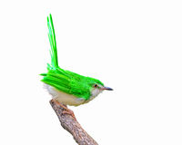 Green bird on branch. Stock Photo