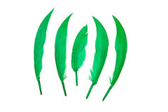 Green bird feather. On white background Stock Images