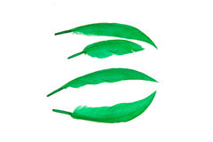 Green bird feather Stock Images