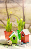 Green bird house and Narcissus in pots, shovel and seeds against garden in spring Royalty Free Stock Images