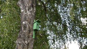 Green bird house nesting-box hang on old birch tree trunk. And branches move in wind stock footage