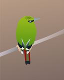 Green bird. Little green bird on branch royalty free illustration