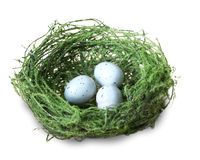 Green bird nest with blue eggs Royalty Free Stock Photography