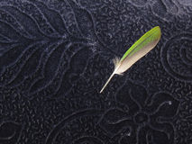 Green bird quill feather on blue velvet background Stock Photography