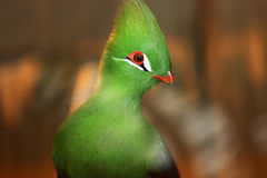 Green bird Stock Image