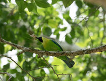Green bird on a tree branch Stock Images