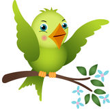 Green bird on tree branch Royalty Free Stock Image