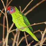 Green bird on a wire Royalty Free Stock Photo