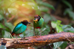 Green bird,with worm in mouth. Royalty Free Stock Photos