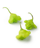 Green bishop crown chili peppers Stock Photos