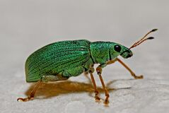Green Black and Brown Insect Stock Photos