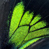 Green and black butterfly wing Stock Photos