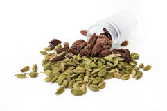 Green and black cardamom Stock Images