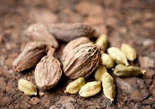 Green and black cardamom Stock Photography
