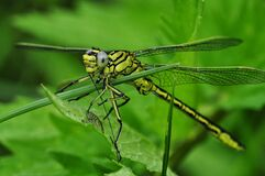 Green and Black Dragonfly on Green Leaf during Daytime Royalty Free Stock Photos