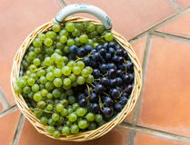 Green and black grapes Stock Image