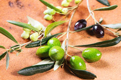 Green and black olive branch Royalty Free Stock Photos