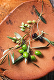 Green and black olive branch Stock Images