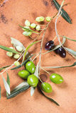 Green and black olive branch Stock Photo