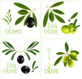 Green and black olives with leaves. Stock Image