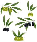 Green and black olives with leaves. Royalty Free Stock Image