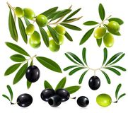 Olives with leaves Royalty Free Stock Photos
