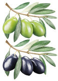 Green and black olives with leaves. Stock Photography