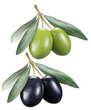 Green and black olives with leaves on a white background. Royalty Free Stock Photos
