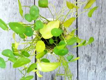green blad yellow Arkivbilder