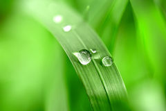 Green blade and drop of rain Royalty Free Stock Image