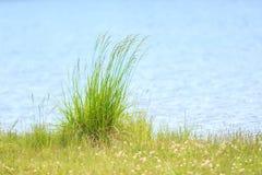 Green blades of grass stock photos