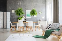 Multifunctional apartment with ferns. Green blanket on grey sofa in multifunctional apartment with ferns above the table and white chairs stock image