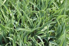 green, blisko trawy Fotografia Stock