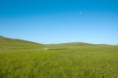 Green and blue. Greenlands in Mongolia in a clear day Stock Photos