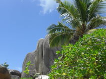 Green & Blue. Rocks and palm trees on the island> La Digue at the Seychelles Royalty Free Stock Photos