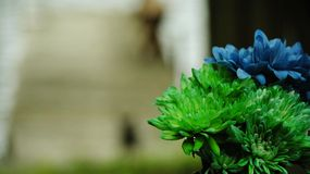 Green and Blue Dahlia Flowers stock photography