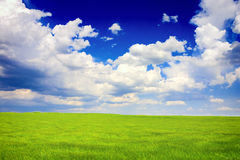 Green and blue landscape. Spring landscape. Is a green field full of wheat plants. Is a sunny day with some white clouds in a blue sky. There was a strong wind Stock Photo