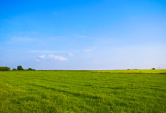 Green blue landscape. Bright green meadow with blue sky Stock Photography