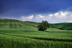 Green and blue landscape. Green landscape under blue sky, at Tuscany (Italy royalty free stock photo