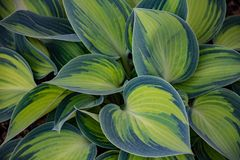 Green and Blue Leaf Plant stock photo